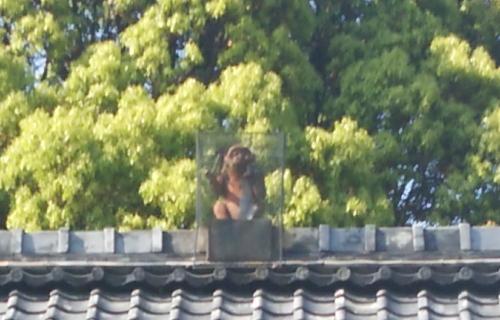 2014.5.10赤山禅院image8