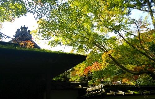 2014.9.7高桐院image4